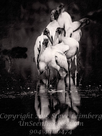 Woodstorks - PAINTING B&W - Copyright 2016 Steve Leimberg - UnSeenImages Com _Z2A9628