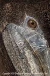 Pelican Eye - Copyright 2014 Steve Leimberg - UnSeenImages Com _M1A2624