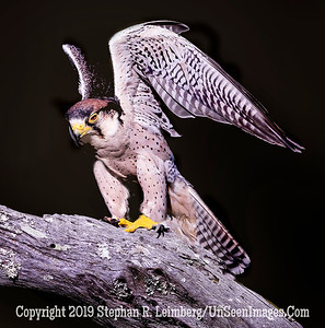 Angel - Copyright 2018 Steve Leimberg UnSeenImages Com _A6I7410