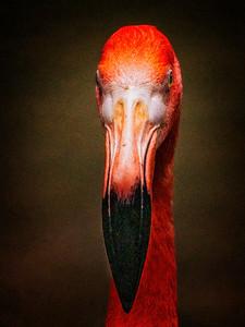 Flamingo Portrait Copyright 2021 Steve Leimberg UnSeenImages Com _DSC1195