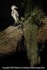 Heron - Copyright 2015 Steve Leimberg - UnSeenImages Com _M1A2364