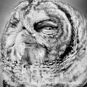 Owlch  B&W Copyright 2018 Steve Leimberg UnSeenImages Com _A6I8996