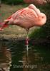 Flamingos - SF Zoo #5970