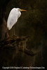 First Egret from 2 Red Cedar - Copyright 2014 Steve Leimberg - UnSeenImages Com _H1R4071