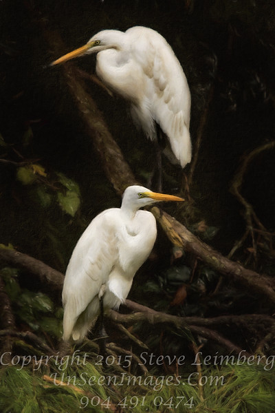 Two Great Egrets PAINTING - Copyright 2015 Steve Leimberg - UnSeenImages Com _M1A6347