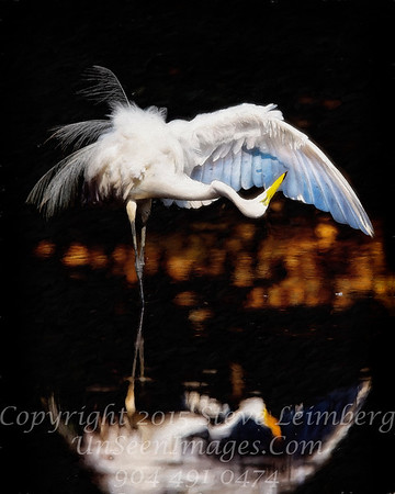 Egret Preening - PAINTING - Copyright 2016 Steve Leimberg - UnSeenImages Com _Z2A1592-Recovered