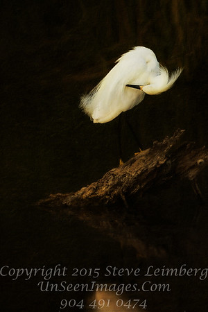 Egret Preening over Log - PAINTING - Copyright 2016 Steve Leimberg - UnSeenImages Com _Z2A9949