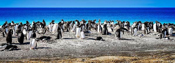 Penguin Colony Copyright 2020 Steve Leimberg UnSeenImages Com _DSC1054