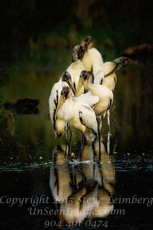 Woodstorks - PAINTING - Copyright 2016 Steve Leimberg - UnSeenImages Com _Z2A9628