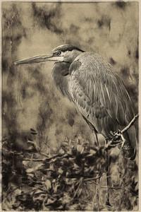 Heron On a Branch B&W Copyright 2020 Steve Leimberg UnSeenImages Com