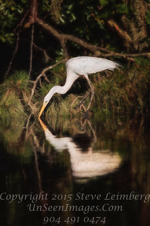 Egret Drinking - PAINTING - Copyright 2016 Steve Leimberg - UnSeenImages Com _A6I4346