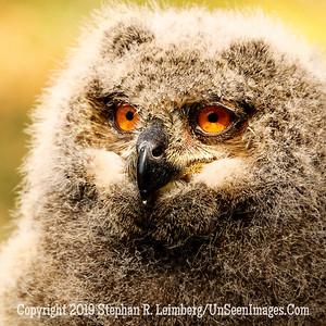 Great Eyes - Copyright 2018 Steve Leimberg UnSeenImages Com _Z2A2133
