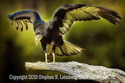 Glory - Copyright 2018 Steve Leimberg UnSeenImages Com _Z2A1787