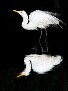 The Early Bird Copyright 2021 Steve Leimberg UnSeenImages Com _DSC1077
