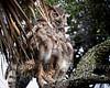 Owl - Copyright 2016 Steve Leimberg - UnSeenImages Com _A6I6337