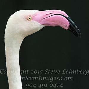 White Black and Pink - Jax Zoo - Copyright 2016 Steve Leimberg - UnSeenImages Com _A6I4519