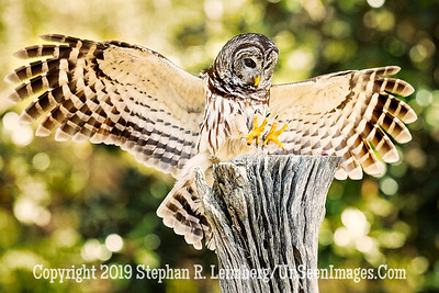 Talons Out - Copyright 2018 Steve Leimberg UnSeenImages Com _A6I8910