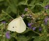 butterflies_QBG003