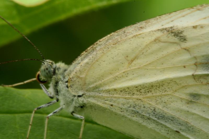 butterfly2674