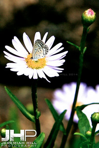 """Butterfly on White"", Seoul, South Korea, 2008 Print KOR3-729-015V2"