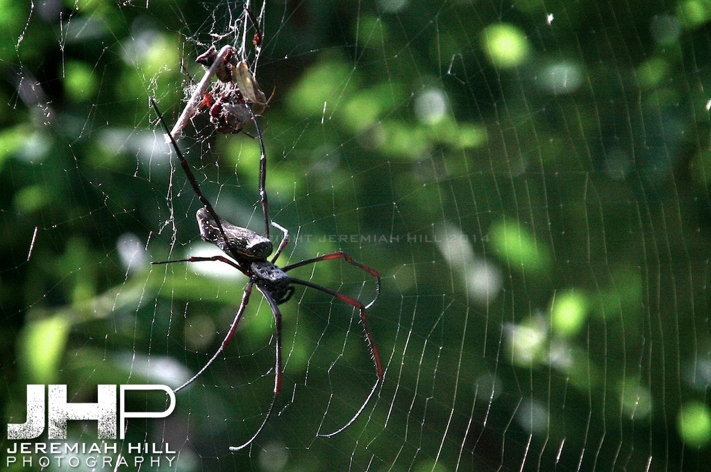 """Perhentian Spider"", Perhentian Islands, Malaysia, 2007 Print ML-067"