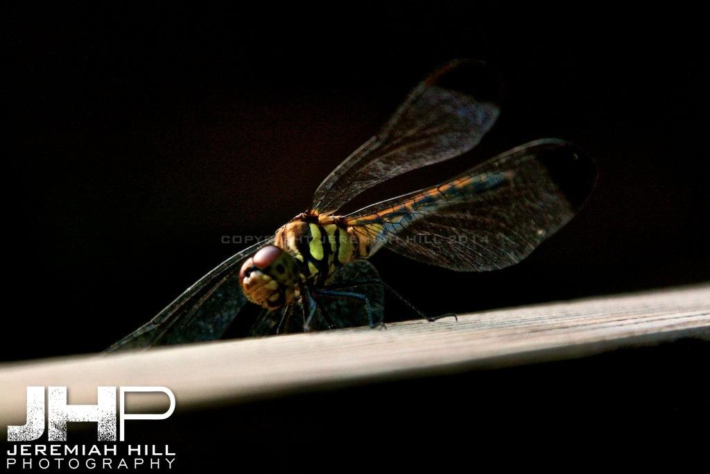 """Dragonfly"", Bundang, South Korea, 2006 Print PM2506-100V3"