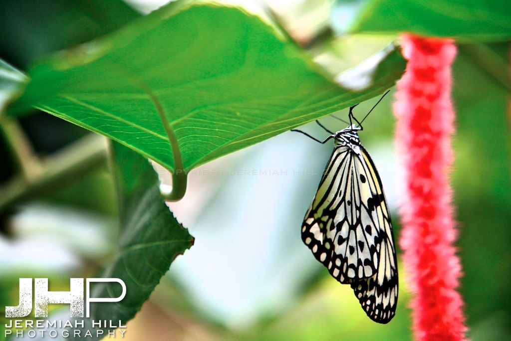 """Hanging Butterfly"", Toronto, Canada, 2013 Print JP13-99-220"