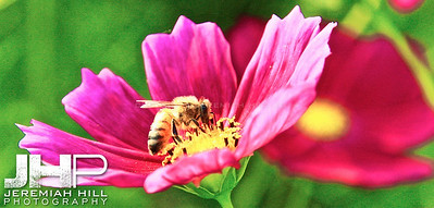 """Bee In Pink"", Seoul, South Korea, 2008 Print KOR3-917-144"