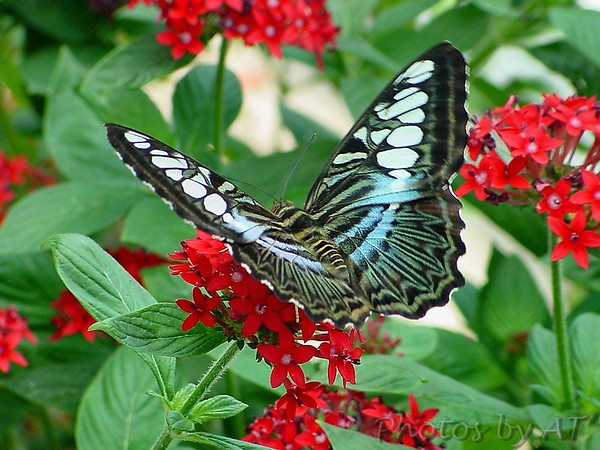 Butterfly House Missouri Botanical Garden