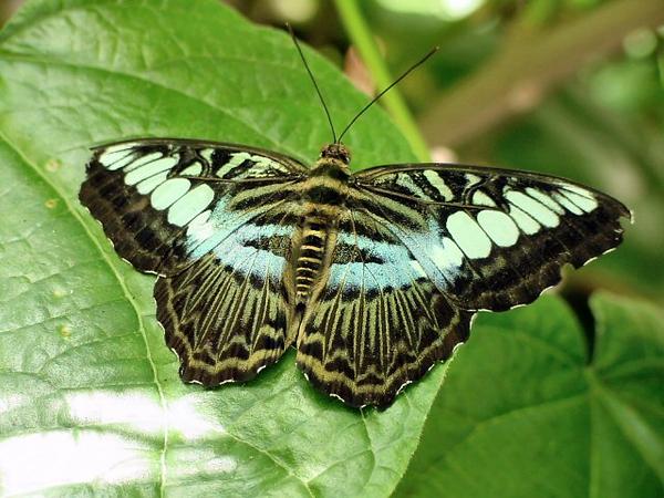 Butterfly House<br /> Missouri Botanical Garden