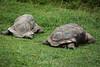 Tortoises - Oakland Zoo #4877