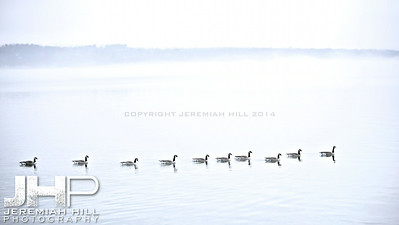 """Couchiching Geese #5"", Orillia, ON, Canada, 2012 Print JP12-124-119"