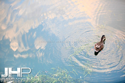 """Couchiching Duck #4"", Orillia, ON, Canada, 2011 Print JP11-93-348"