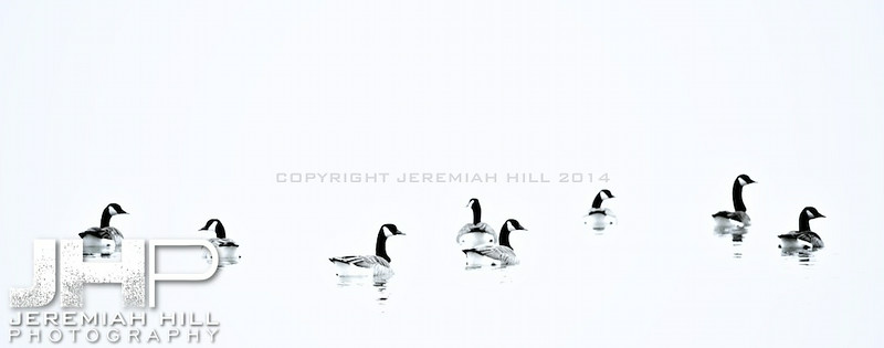 """Couchiching Geese #2"", Orillia, ON, Canada, 2012 Print JP12-124-076"
