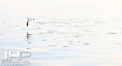 """Orillia Seagul #4"", Orillia, ON, Canada, 2011 Print JP11-93-110"