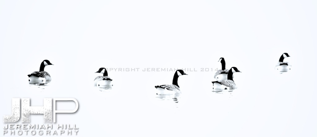 """Couchiching Geese #1"", Orillia, ON, Canada, 2012 Print JP12-124-075"