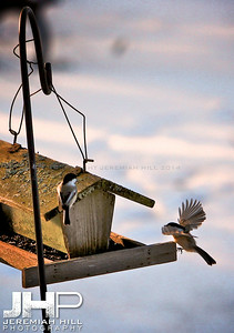 """Touchdown"", Hillsdale, ON, Canada, 2012 Print JP12-111-081"