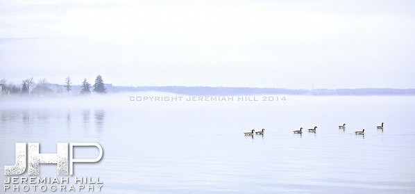 """Couchiching Geese #4"", Orillia, ON, Canada, 2012 Print JP12-124-088"