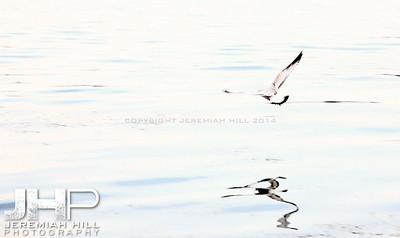 """Orillia Seagul #3"", Orillia, ON, Canada, 2011 Print JP11-93-109"