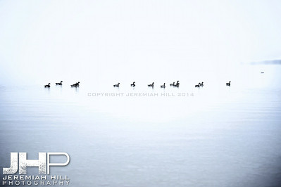 """Couchiching Geese #3"", Orillia, ON, Canada, 2012 Print JP12-124-080V2"
