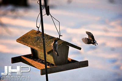 """Flyby"", Hillsdale, ON, Canada, 2012 Print JP12-111-080"