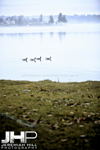 """Couchiching Geese #6"", Orillia, ON, Canada, 2012 Print JP12-124-123"