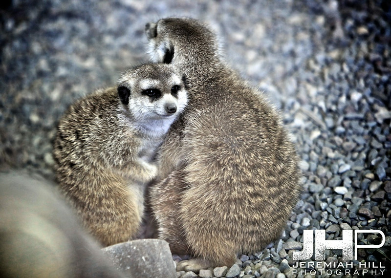 """Unidentified Toronto Zoo Animals #3"", Toronto Zoo, 2013 Print JP13-99-386"