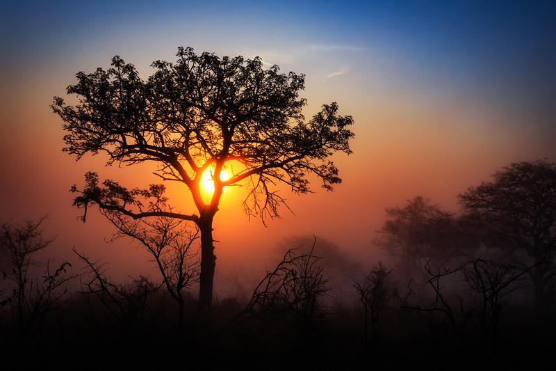 Misty Morning at Pretoriuskop