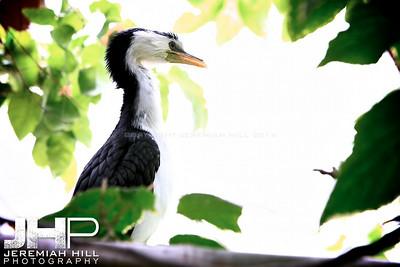 """Unidentified Bird Toronto Zoo Bird #1"", Toronto Zoo, 2013 Print JP13-99-128"
