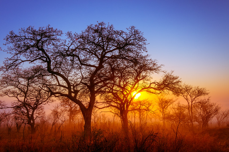Pretoriuskop Morning