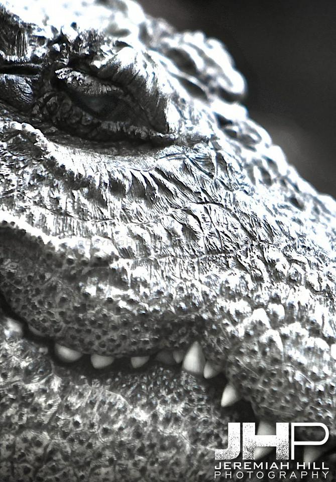 """Relic #3"", Toronto Zoo, 2014 Print JP13-99-376V3"