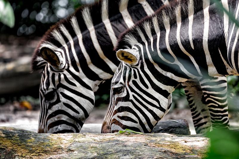 Double Stripes