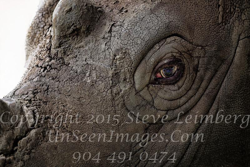 Rhino Eye White Oak - Copyright 2016 Steve Leimberg - UnSeenImages Com _20110328_1665