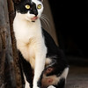 Nuts and Bolts Man's Cat - Havana - Copyright 2017 Steve Leimberg UnSeenImages Com _DSF0567